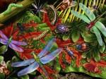 Bugs_Jungle-572