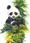 Colgate_Panda-573